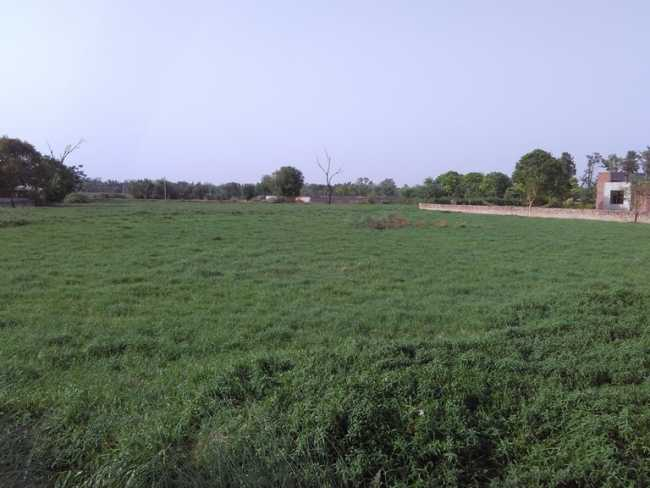 The swamp on Delhi side of Dwarka Expressway