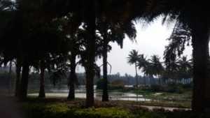 Lake near GM Infinite E-city Town